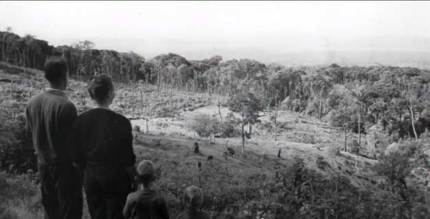 Family overlooking jungle clearing