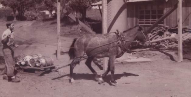 Horse pulling cargo sled